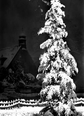 Der Weihnachtsbaum schmückt auch den Holfelder Platz. - Dieter Oemler