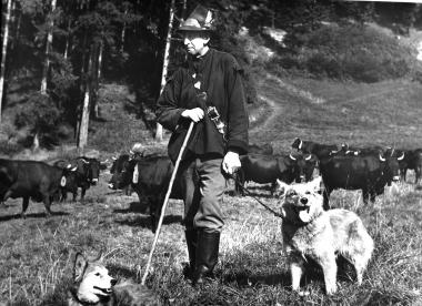 Hasseröder Herde am Ottofelsen - Dieter Oemler