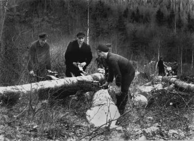 Zweimann-Motorsäge im Forstwirtschaftsbetrieb Wernigerode - Dieter Oemler