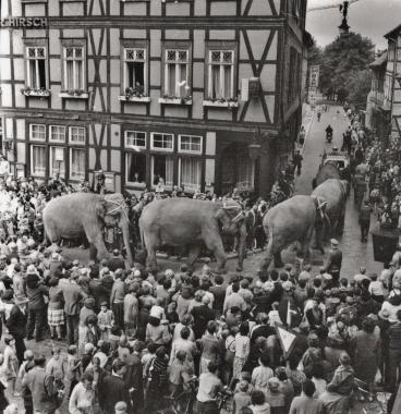 """Elefanten vom Zirkus """"Aeros"""" - Stadtarchiv Wernigerode (Archiv Dieter Möbius)"""