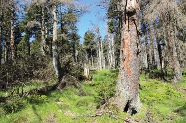 Am Osthang des Brockens - Nationalpark Harz