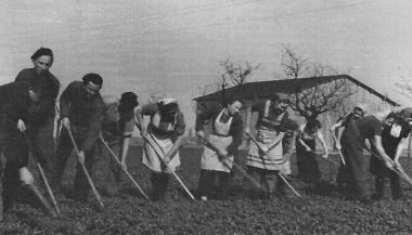 Hilfe in der Landwirtschaft - Archiv Manfred Fuhlroth