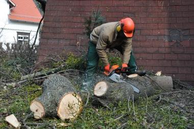 Am ehemaligen Jugendgästehaus fallen Bäume. Das seit Jahren leer stehende Gebäude wird als weiteresStudentenheim ausgebaut. - Holger Manigk