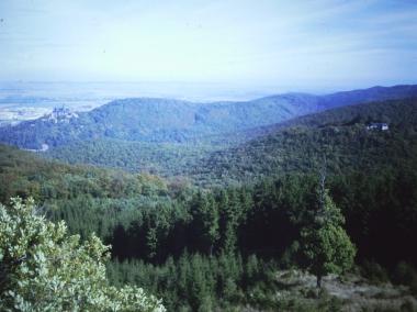 Blick auf den WernigeröderStadtwald vom Armeleuteberg © Wolfgang Grothe