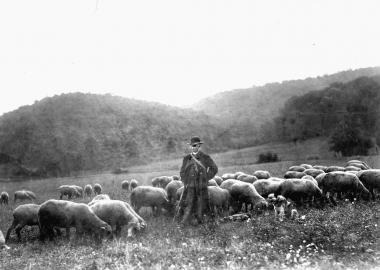 Schafe weiden im Friederikental. - Dieter Oemler