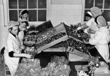 """""""Argenta"""" Schokoladenfabrik 1961 - Mahn-und Gedenkstätte Archiv"""