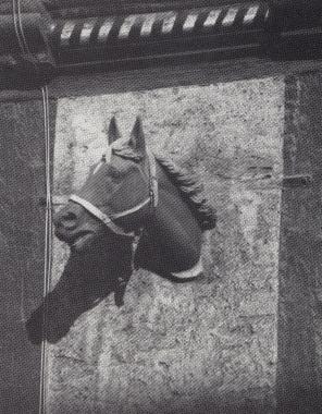 Pferdekopf an der Krellschen Schmiede - Stadtarchiv Wernigerode