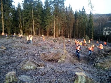Die Mitarbeiter von U&W befreien den Wald von Reisig und Totholz. - Michael Selmikat