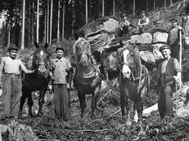 Forstarbeiter mit Kaltblutpferden - Dieter Oemler