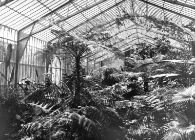 Palmenhaus im Lustgarten - Dieter Oemler