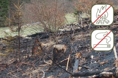 Waldbrandgefahr - Friedhart Knolle