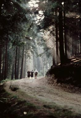 Waldweg um Wernigerode - Stadtarchiv Wernigerode
